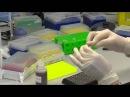 Подготовка ДНК библиотек для секвенатора Illumina MiSeq DNA library preparation for Illumina MiSeq p