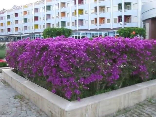 Квітучий дворик на території готелю Grand Haber 5. Blooming patio in the Grand Haber 5