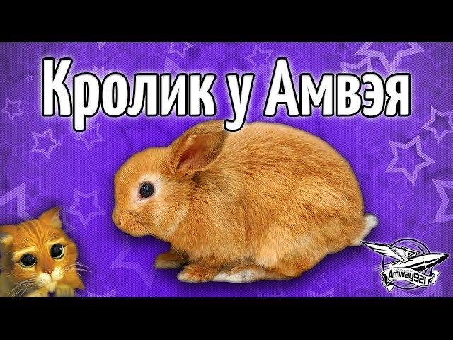 Кролик у Амвэя - Он такой милый и добрый!
