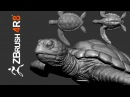 Sculpting a Carey Turtle From Scratch in ZBrush 4R8 Part 01