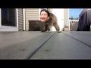 Cookiezi attac
