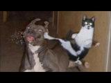 Коты бют лица собакам!