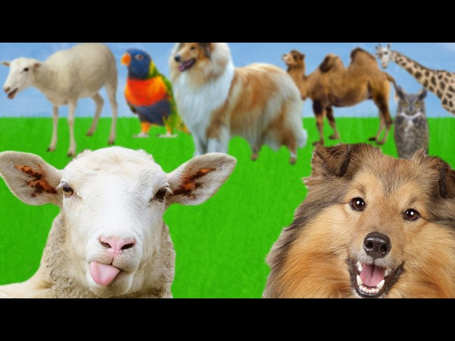 Help the SHEEP and the DOG to find Find Mom Learn Animals Names and Sounds for Kids