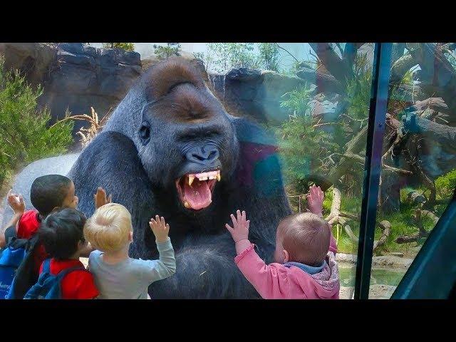 Наш любимый зоопарк. Дети и животные