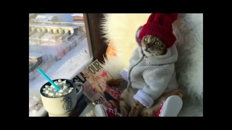 The Most Chill Cat Ever by ANGEL BENGAL CAT