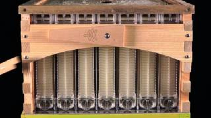 The Flow Hive for honey bees, Love it? Hate it? or Undecided? Price? Review of Quality Control