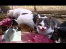 Brutal Death Metal Cats брутальные коты хардкор