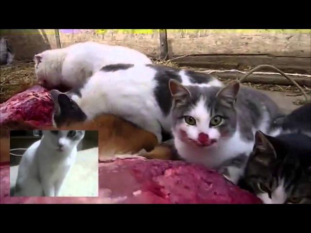 Brutal Death Metal Cats\ ,брутальные коты, хардкор