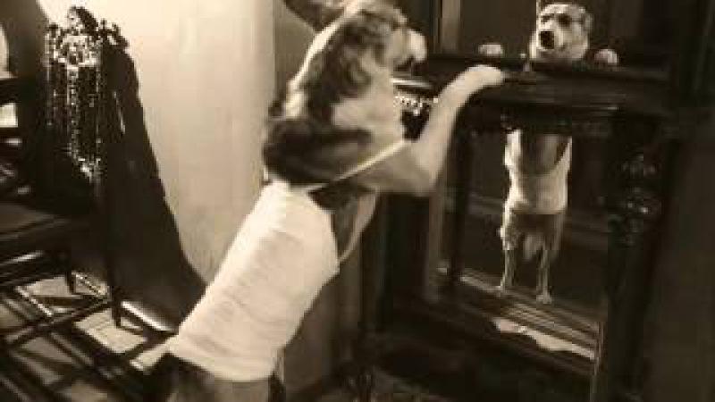 Очень возможно, что бабушка согрешила с водолазом! (...из кинофильма Собачье серд ...