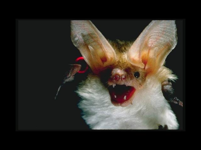 Ричард Матесон- Выпей мою кровь (Аудиокнига)Классики Ужасов