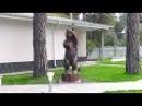 Тополь превратился в медведя