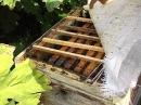 как узнать, что пора расширять объем улья или гнезда для пчел ?