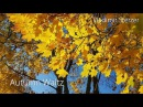 Autumn Waltz | Beautiful romantic piano music | Beautiful video | Vladimir Sterzer