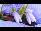 When the snowdrop blossoms (music Eldar Mansurov)