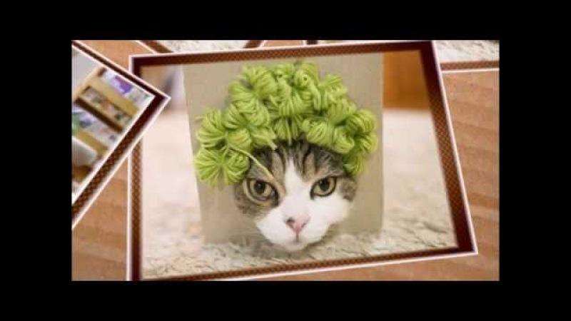 Коты в коробках - прикольный клип для поднятия настроения
