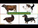 Развивающий мультик о животных на ферме Как говорят разные животные