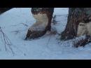 Песня про лыжи - Мельников В.Н., сл. Н.А. Заболоцкого