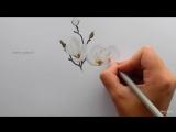шаг за шагом, как нарисовать белую магнолию цветными карандашами