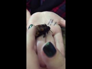 Зоология. Мадагаскарский таракан