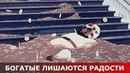 Богатые лишаются радости. Священник Игорь Сильченков