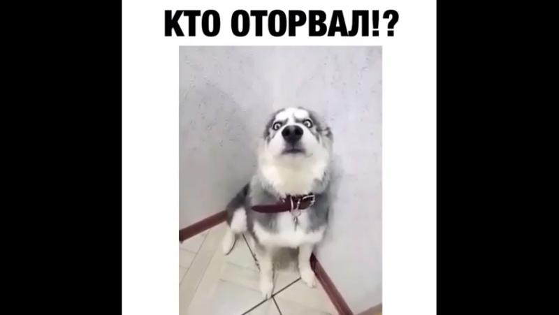 Плохой пёсик