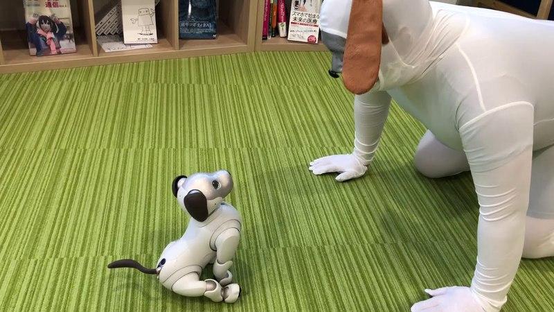 Sony robot「aibo」 Robotics suit「aipo」