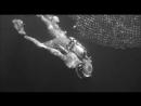 Создание из Черной лагуны 1954