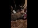 отчаянные кошечки