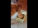 Собачке сделали подарок на новый год