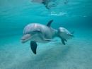 Животные • Дельфин