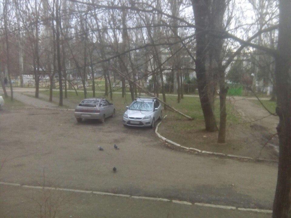 Дерево раздавило машину. Кто за это ответит?
