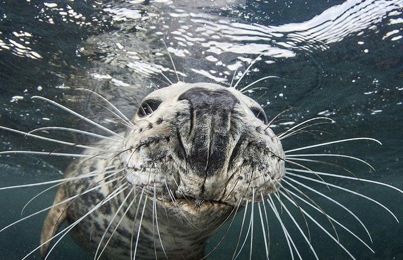 Тюлень отобрал видеокамеру у дайвера: фоторепортаж