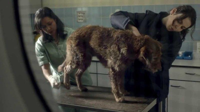 Pedigree 2013 Feeding Brighter Futures Ad Bad Dog, Good Dog
