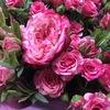 Цветы Букеты Воскресенск Доставка
