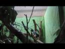 Грызун-трюкач в зоопарке Екб