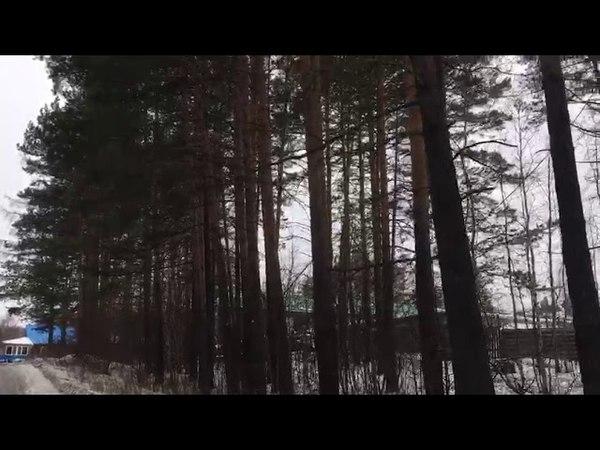 Деревья Якутска...Берегите природу...Прогноз 22 3 18...