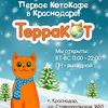 Антикафе «ТерраКОТ» котокафе Краснодар