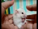 Очень короткое видео, Но зато очень смешное Смотрите