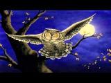 рассказ сова бианки