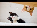 FUNNY NEW VIDEOS: Funny Cats - Funny Cat Videos - Kitten Fails 2014 [HD]