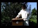 Пчеловодство уникальный метод 3 5 фляг меда с улья