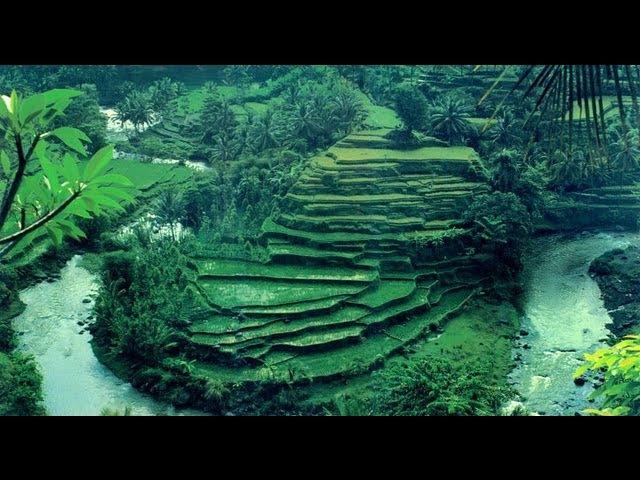 Бали - Индонезия (Убуд). Вокруг Света Ubud. Bali. Indonesia