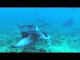 Подводное плавание с маской (СНОРКЛИНГ) на Мальдивских островах
