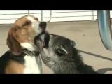 Бассейн енот и собака приколы с животными собаками еноты драка.