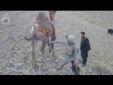 Американский солдат против верблюда - (Ржач, секс, порно, смешно, приколы, вот это поворот, драка, разборки)