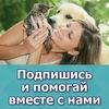 """ООЗЖ """"Кот и Собака"""". Помощь бездомным животным"""
