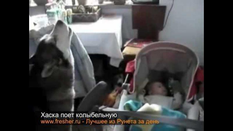 Собака спела колыбельную и малыш успокоился