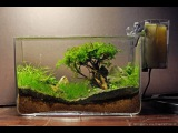 How to grow  Moss trees
