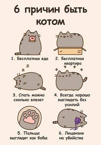 Картинки Котиков Няшных Мультяшных