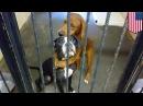 Ветеринар спас собаку от гибели благодаря «вирусной» фотке